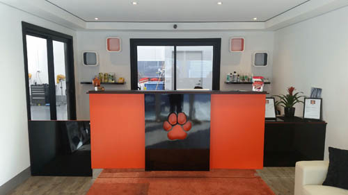 Jo's Pampered Pets Reception Area