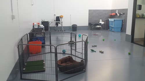 Jo's Pampered Pets - Inside our doggy daycare