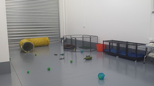 Jo's Pampered Pets - Inside our doggy daycare - 2nd view