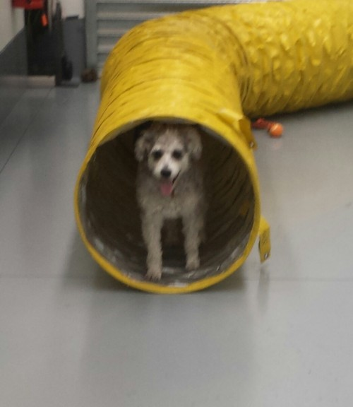 Jo's Pampered Pets - The doggy tunnel